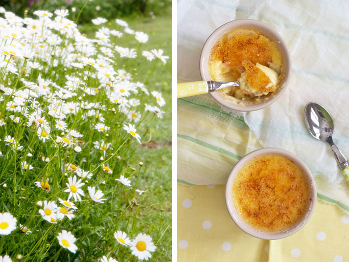 Creme brulee with daisies