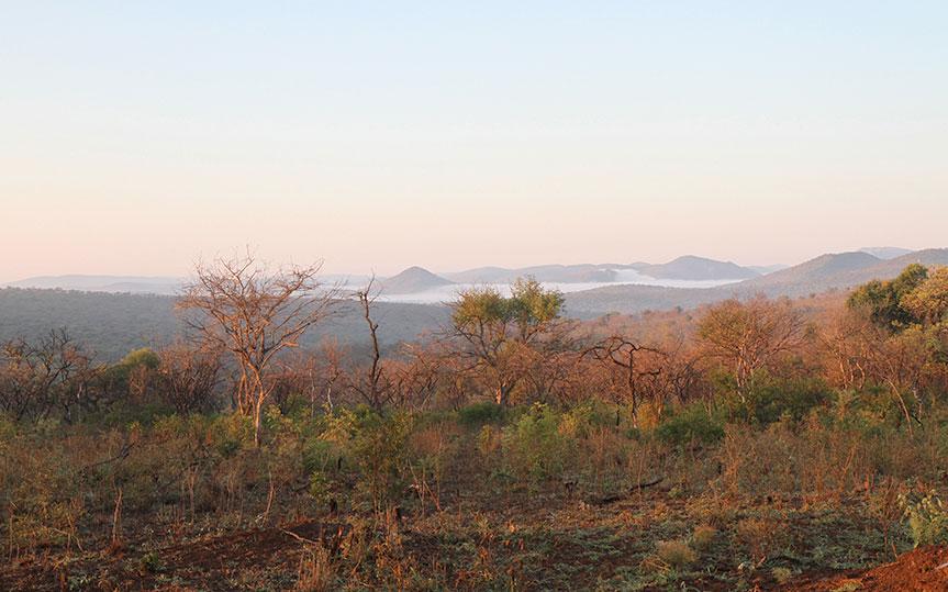 Zululand-bushveld