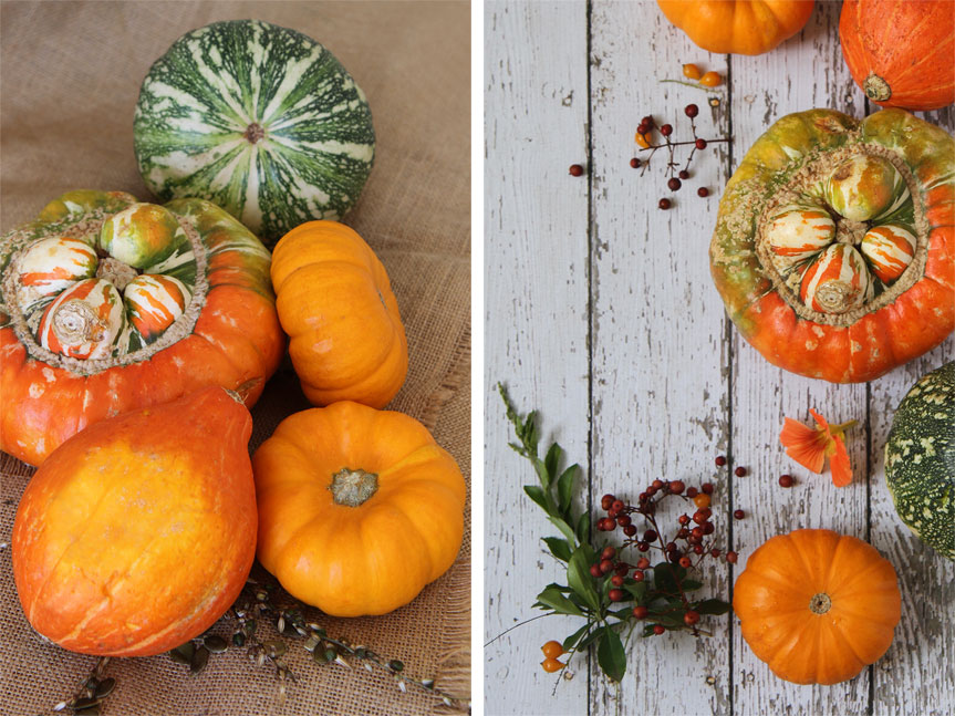 Pumpkins on rustic backgrounds