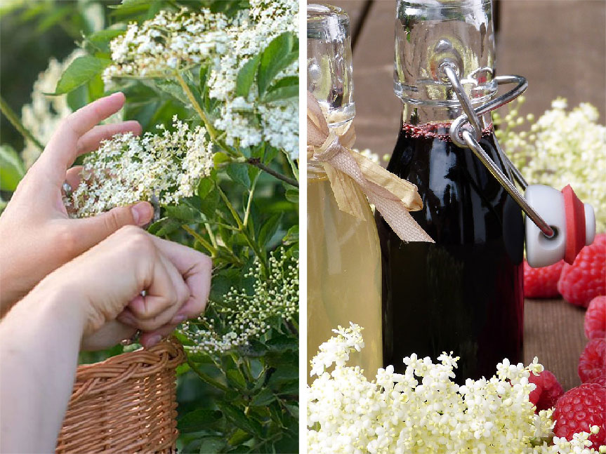 Flower syrups